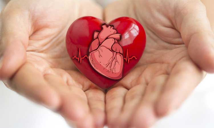 Healthy Heart Leads To Healthy Life